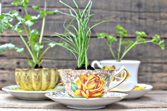 tea cup herb favors via intimate weddings